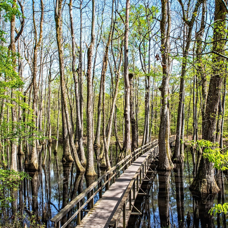 Cypress Swamp by Richard Michael Lingo - Landscapes Waterscapes ( waterscape, mississippi, swamp, landscape, cypress,  )