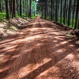 Plantation road by Peet Snyder - Landscapes Travel ( gravel, pine tree, sunlight, pine, road, plantation, pine trees, shadows, travel, empty )