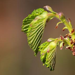 Croissance by Michel Lapensée - Nature Up Close Leaves & Grasses
