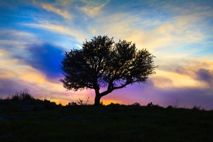 Multicolor silhouette di fr4ssetto