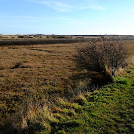 View from the Dyke by DJ Cockburn - Landscapes Prairies, Meadows & Fields ( england, mud, romney marsh, saltmarsh, river rother, wetland, dyke, bush, east sussex, rye harbour nature reserve, english channel )