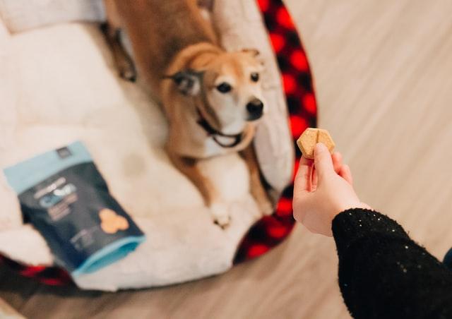 9 Best Dog Treats Guaranteed to Make Dog Training Faster