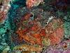 Reef Stonefish, Curtesy of TAKA