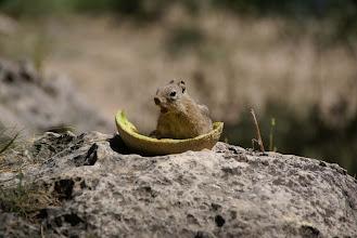 Photo: Chipmunks were many, bold & fat.