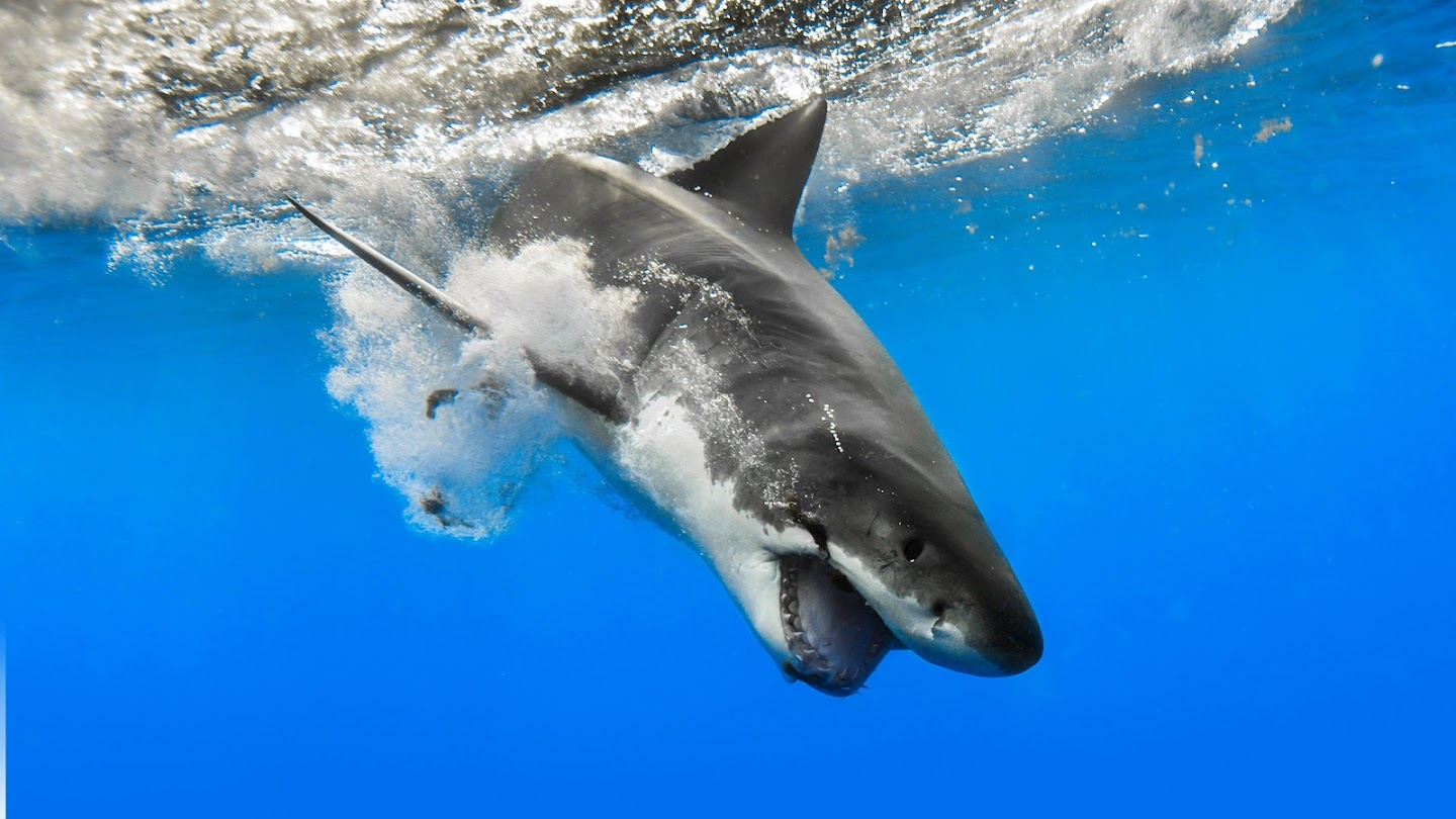 Watch When Sharks Attack live