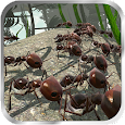 Ant Simulation 3D - Insect Survival Game apk