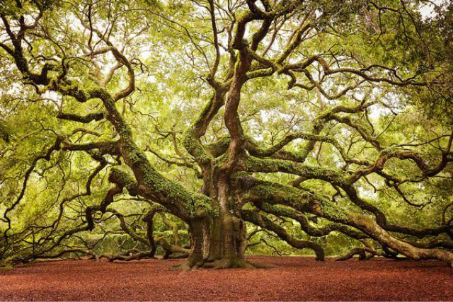 1_amazing-trees-9.jpg