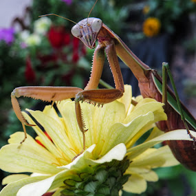 I picked this flower for you. by Mona Marie Hess - Animals Insects & Spiders ( monahess,  )