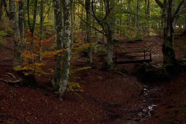 Autunno in foresta di dimarmo