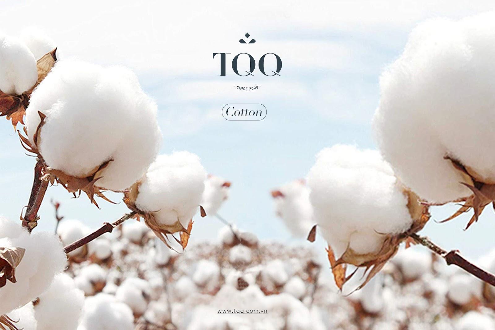 Chất liệu cotton dùng trong may áo sơ mi nam tại TQQ