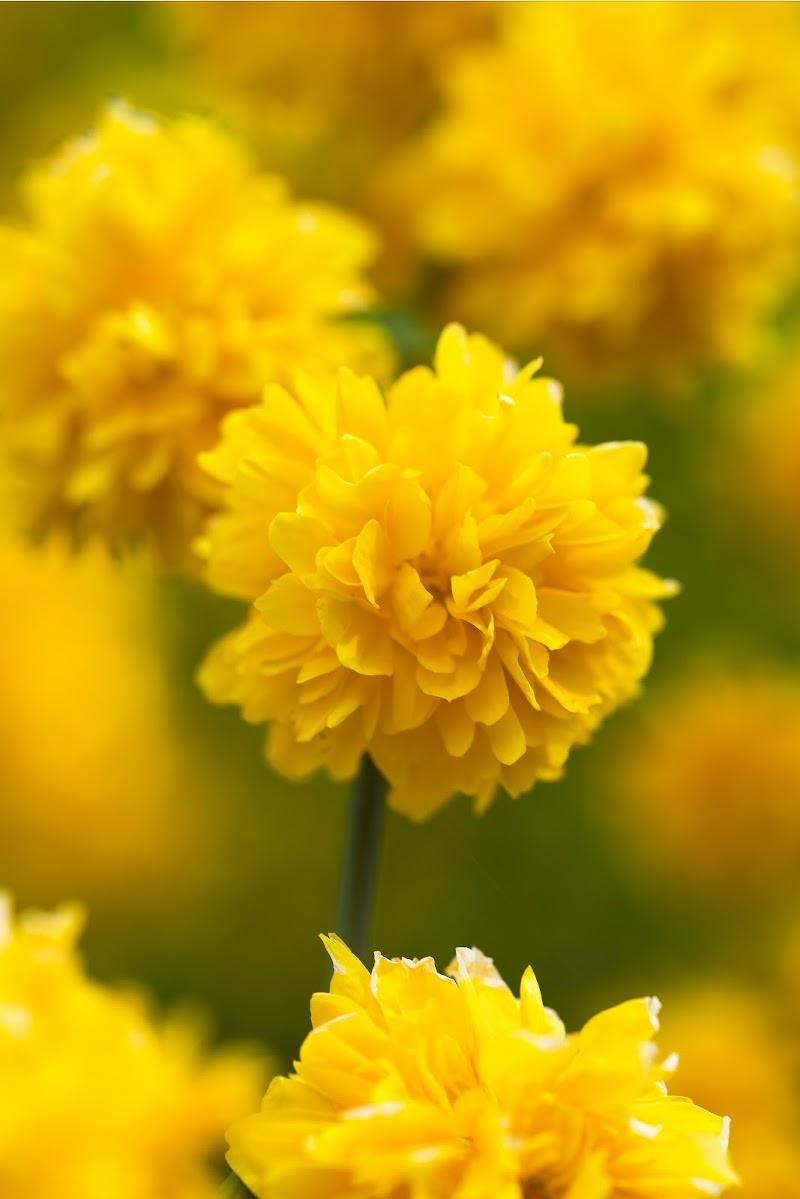 Fiore d'aprile di Doriana Frau