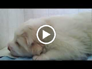 Video: Baby puppies at 3 weeks old