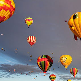 Up, Up, and Away by Dave Files - Transportation Other ( sky, colors, festival, hot air balloons, morning )