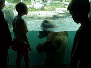 Photo: A Window Wednesday View at the Zoo....  Two worlds separated by a view through glass..... ------------------------------------------------------------------------------------------------ ... #WindowWednesday ... see the whole shared album here : https://plus.google.com/photos/100519245975462538531/albums/5677963338034317857  ... #FineArtPls