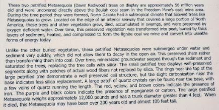 Photo: Description of pertified logs at entrance to North American Coal Freedom Mine.