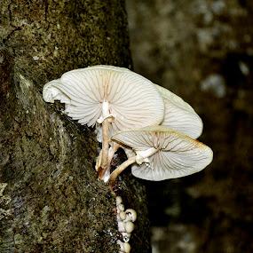 Trio by Radisa Miljkovic - Nature Up Close Mushrooms & Fungi