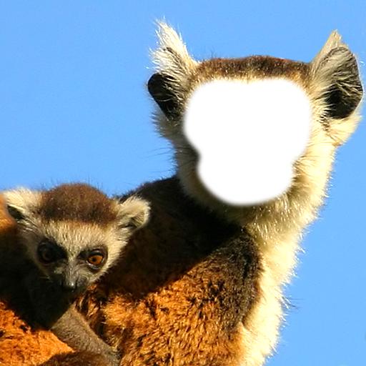 有趣的猴子的照片蒙太奇 攝影 LOGO-玩APPs