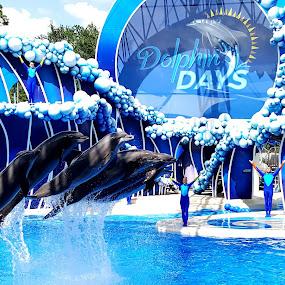 Sea World, Orlando, FL by Tameem Sanjar - Animals Sea Creatures ( blue, dolphins, animal performance, sea world,  )