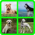 Guess dog breeds icon