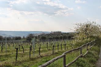 Photo: Le nostre vigne e sullo sfondo #Orvieto con il Duomo  Aprile 2015