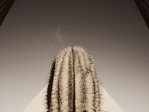 Photo: Can you guess the monument where I captured this imposing cactus?