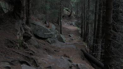 Photo: Zielonym, zimowym szlakiem ze Szczyrbskiego Plesa do Popradzkiego Plesa.
