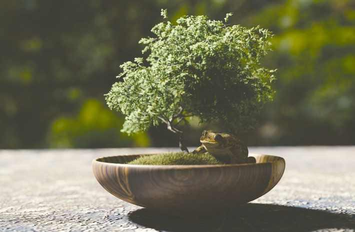 Different Types Of Bonsai Trees And How To Tend Them The Leaf Online