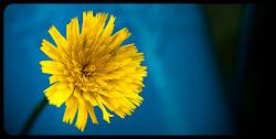 giallo Minimal
