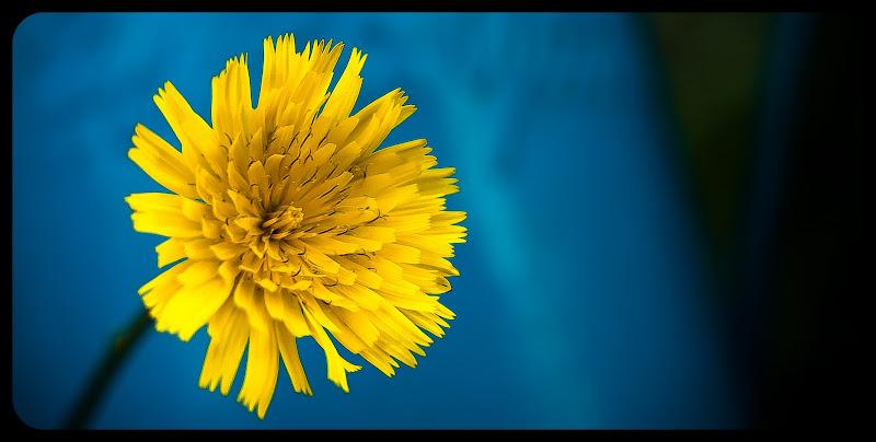 giallo Minimal di renatoxxx