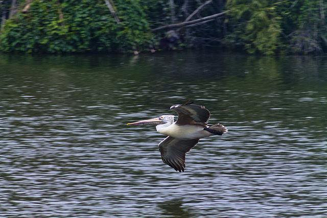 Capture in motion shots of birds