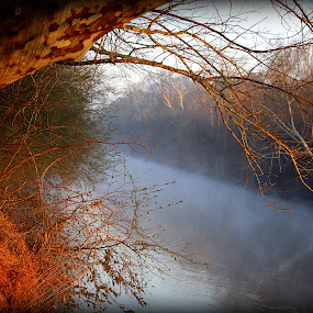 Window at the Bank by Kevin Hill - Landscapes Waterscapes ( foggy, riverside, trees, bank, sunlight, river,  )