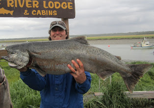 Photo: The largest of the Pacific Salmon, the King is Alaska's state fish.