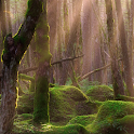 live wallpapers rainforest icon