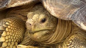 Turtle-Necked thumbnail