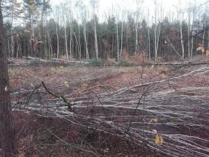 Wycinka drzew wzdłuż linii 183 w pobliżu Pogorii 1