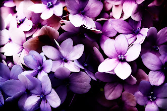 Photo: ...purple dreams...  Happy Friday, Floral Friday Everyone...  With this lovely hydrangeas I wish you Wonderful Friday And Weekend...  My contribution to #floralfriday  +FloralFriday by +Tamara Pruessner; #breakfastclub  +Breakfast Club by +Gemma Costa; #purplecircle  +PurpleCircle by +Lynn Langmade and +Sinead Sam McKeown; #canonusers +Canon Users curated by +Gene Bowker, +Elizabeth Hahn, and +John Spade;   View larger image and more works from Purple/Pink Floral Gallery: http://milenailieva.smugmug.com/Galleries/PurplePink/23921477_zBmsRT#!i=2325237412&k=QgmfBfb&lb=1&s=A