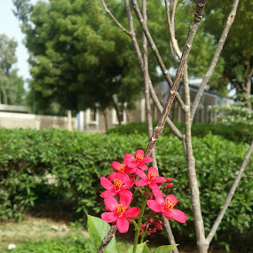Little Flower by Zubair Chana - Flowers Flowers in the Wild ( flowers, greenery, green, flowering plants, flower )