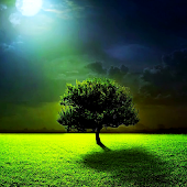 Moon & tree live wallpaper