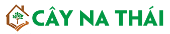 Cây Na Thái