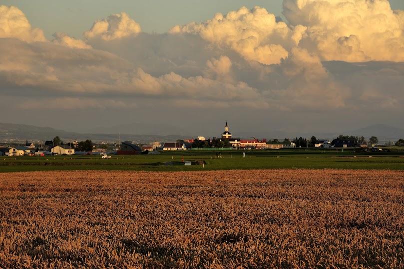 秋蒔き小麦と入道雲