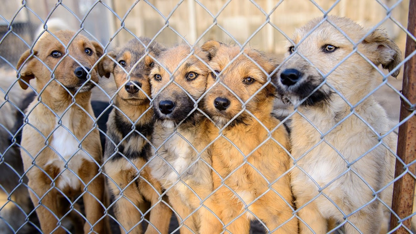 Watch Confessions: Animal Hoarding live