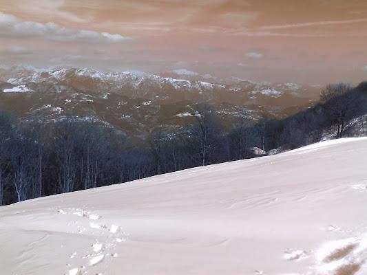 Solchi nella neve di micia78