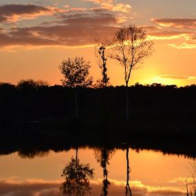 Sunset reflection by Vanja Vidaković - Landscapes Sunsets & Sunrises ( magic, reflection, sunset, trees, river,  )