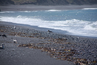 Photo: what looked like a little seal to us in the first place