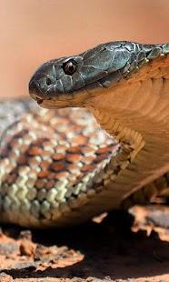 Snake Sounds HD LWP - náhled