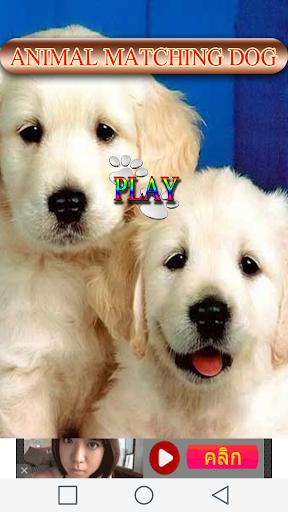 Animal Matching Dog