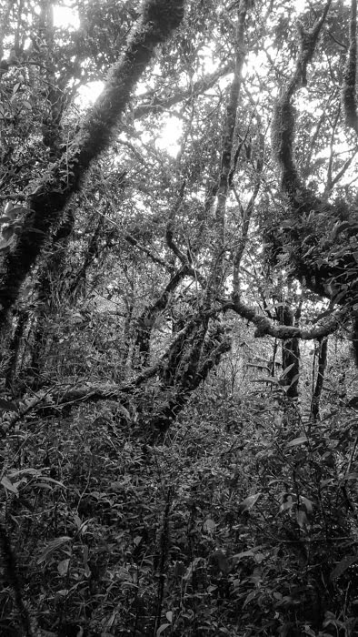 the dense jungle of Amboro national park near Samaipata, bolivia