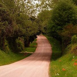 The Road Not Taken by Brenda Shoemake - Transportation Roads
