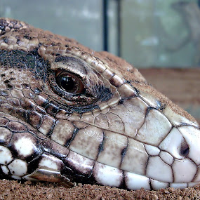 by Brq A - Animals Reptiles