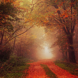 20171021-DSC_2821 by Zsolt Zsigmond - Landscapes Forests ( fog, autumn, fall, trees, forest, road, light, mist )